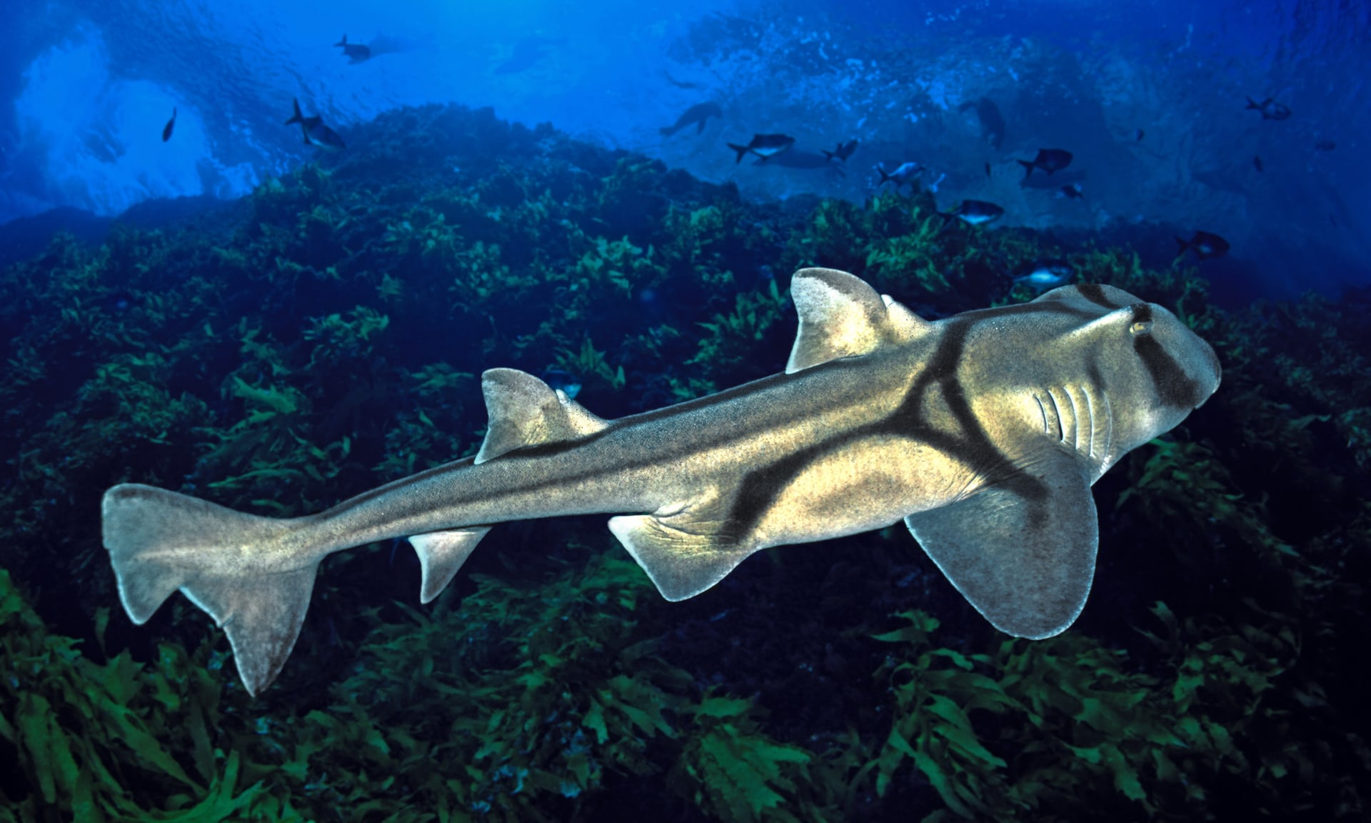 Sharks love jazz but are stumped by classical, say scientists